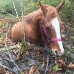 Wyant Road horse in bog